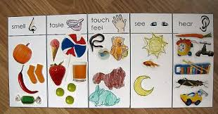 pinterest preschool crafts five senses | Joe created a 5 senses ...