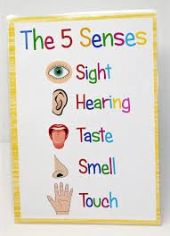 Happy Learners THE FIVE SENSES A4 Poster Sign Educational Nursery ...